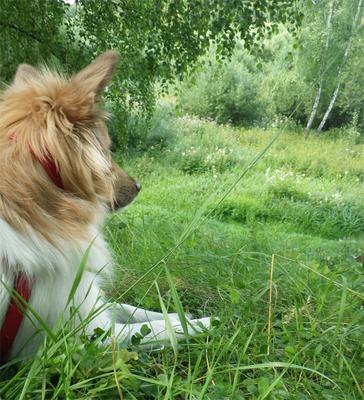 Время медитации. собака, поляна, нирвана