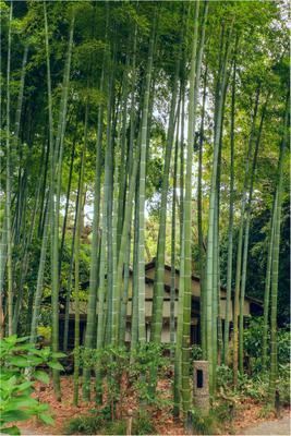 А снится нам трава,травааа... у дома. Япония