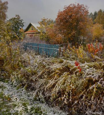 Снежно-золотая осень осень паша