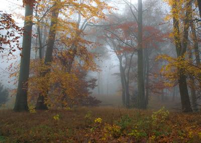 осень осень листья деревья краски