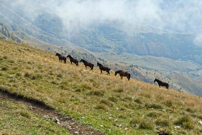 Лошадиная диагональ лошади кавказ ингушетия столовая гора