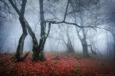 Утро на Ай-Петри пейзаж крым лес туман горы ай-петри осень утро облака
