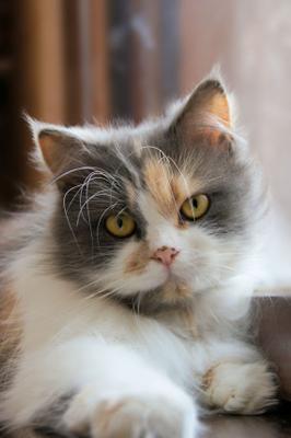 кошка на окошке :) котопортрет