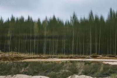 Между небом и водой отражение вода природа пейзаж небо лес