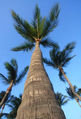 Отпускное Пальма