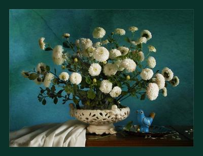 Синяя птичка хризантемы и синяя птичка