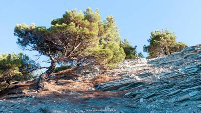 Жизнь на скале скала деревья