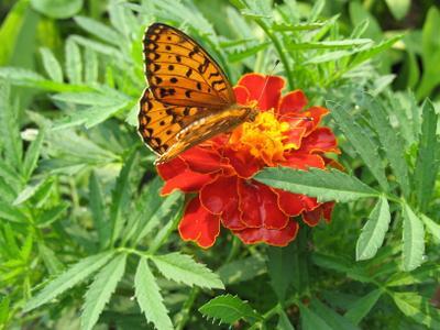 Цветок и бабочка природа лето флора фауна цветы макро насекомые бабочки