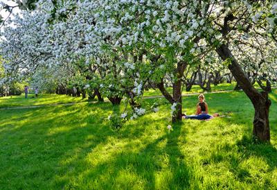 ***Яблоневый сад Коломенское яблоневый сад вечер