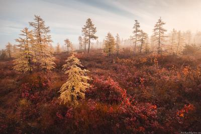 """Голубичная лесотундра"" Магаданская область осень краски осени туман голубика лесотундра"