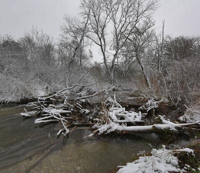 На лесном ручье ручей утро падающий снег