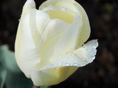 Нежный белый