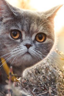 пушенька кошка портрет кошки кот животные