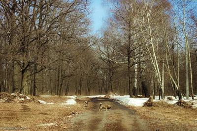 На прогулке пейзаж природа лес дорога.собачка