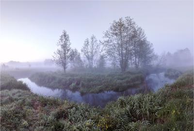 2017. Вечер на р. Дубовец пейзаж вечер туман река деревья воздух свет настроение состояние берега влажность