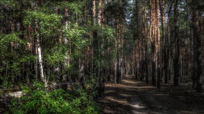 Гуляя в лесу. пейзаж лес