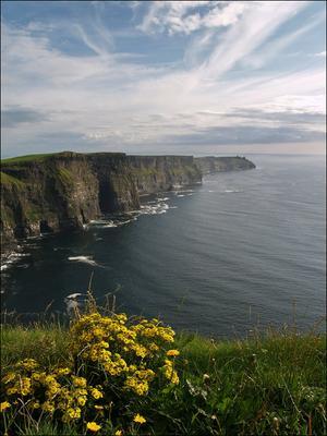 цветы на крае старого света скалы желтые цветы океан