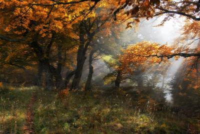 ***Там, на неведомых дорожках... Лес грабы туман лучи солнца