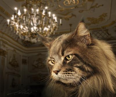 Marquis de Diego Digital Photo Art Cat World Winner Eltons Fantasies