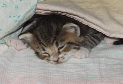 так спать хочется...