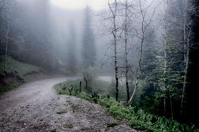 Туман Горы лес туман