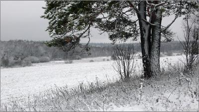 Первый снег снег