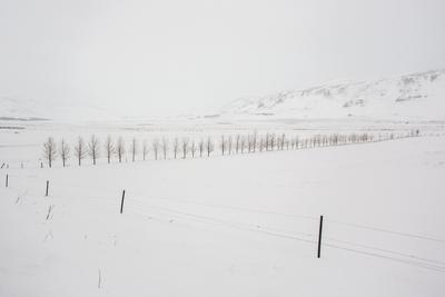 Тишина зима исландия деревья ритм снег горы