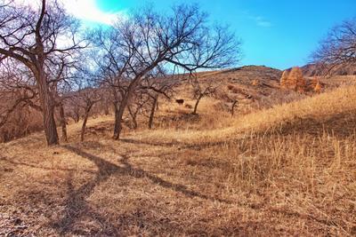 Здравствуйте, Корова! трава сопки природа небо Монголия корова деревья тени