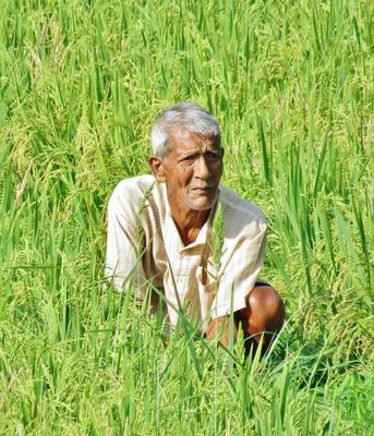 """Старик и """"море"""" (риса) старик дед дедушка люди рис море портрет old man people sea rice"""