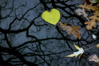 Осень Осень, желтое сердце