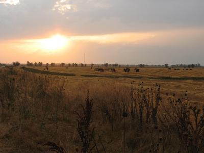 *** кони лошади степь поле солнце дождь