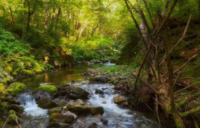 таёжный ручей.. лето Приморье тайга таёжный ручей