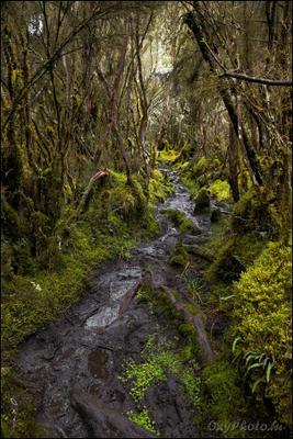 Тропа в дождевом лесу. africa, rainforest, rwenzori, uganda, африка, дождевой лес, рувензори, уганда