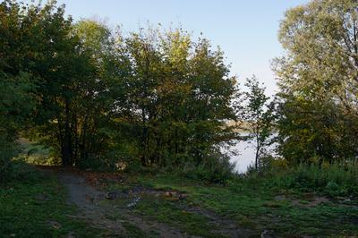 В лесу у реки