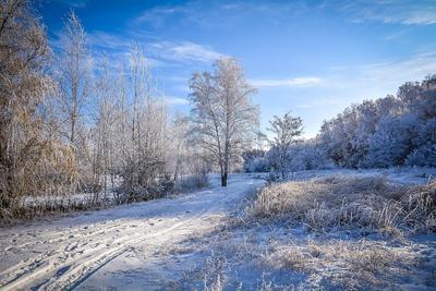 Морозный день зима