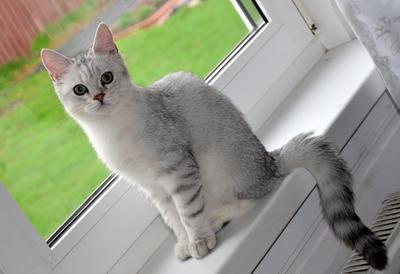 Степашка №8 коты