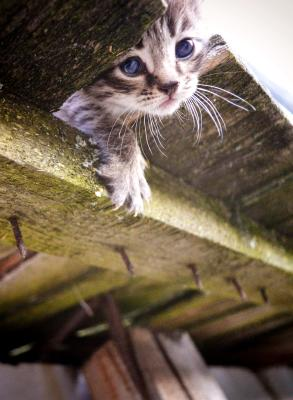 Kitty kitty кот cat
