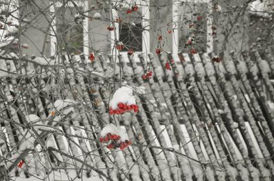 Калина калина снег зима