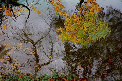 ***Зазеркалье… Осень отражение озеро