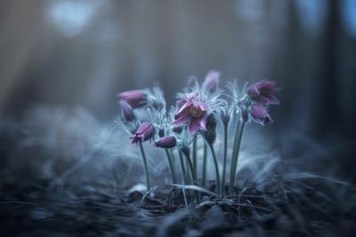 Весеннее благоухание цветов