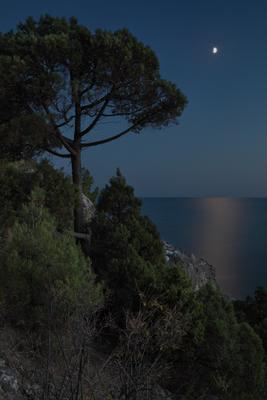 Сосна море луна сосна горы