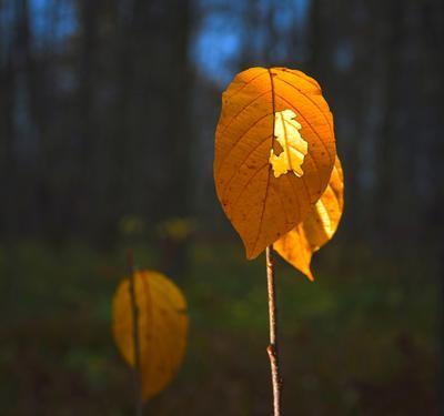 Осенний этюд .