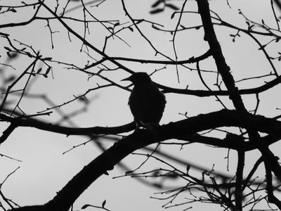 *** лист.осень.дерево.природа.птица