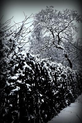 Изгородь забор, дерево,снег