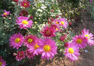 Солнечное утро осень цветы