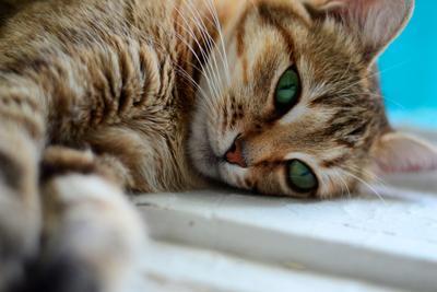 муся кошка кот котэ
