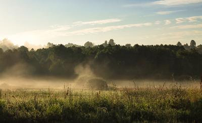 утренняя прохлада утро туман лето