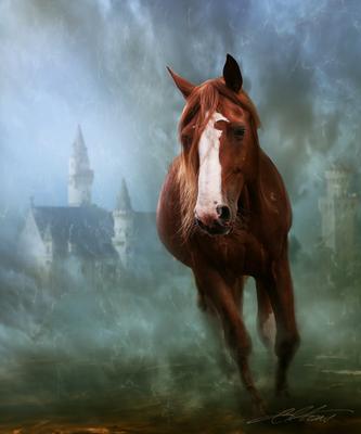 Rembrant Comes Digital Photo Art Horses Eltons Fantasies