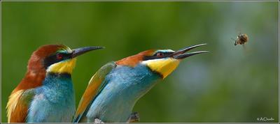 Крылья , крылья, уносите мою ж..., моё жало ) птицы шмель уноси жало