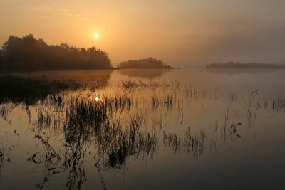 Утро туманное восход солнца